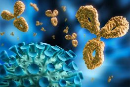 Immune System Goes Awry During Infection