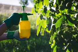 Lowering Your Risk of High Pesticide Levels